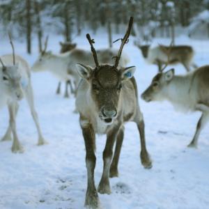 フィンランドの「カクシラウッタネン」に泊まれば、天に手が届く?