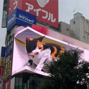 新宿に巨大三毛猫が出現!?間違いなく新宿の新名所になるね!