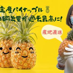 #みんなで台湾パイナップルを食べよ