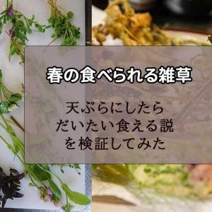 美味しい雑草10選・春~天ぷらにすればだいたい食べられる~