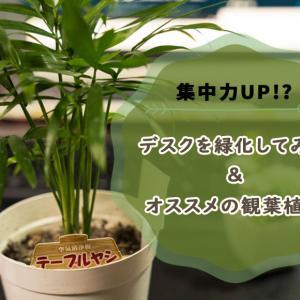 【デスク緑化計画】観葉植物でメンタル改善と集中力UPを試みたのだが…