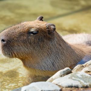 山形県天童市の温泉に行きました in 天童最上川温泉 ゆぴあ