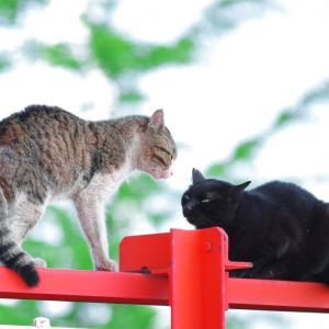 猫の喧嘩と車の上