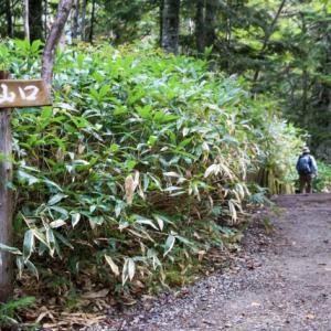 膝を痛めた私が反省を交えてお伝えする、登山の基本的な歩き方とコツ