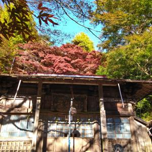 【丹沢大山】紅葉シーズンに大山詣りを堪能したい! 駐車場事情と混雑状況は?