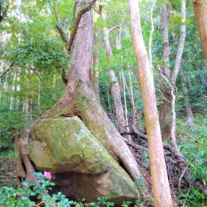世界遺産「熊野古道」ってどこにある? 登山やトレッキング好きにおすすめしたい理由