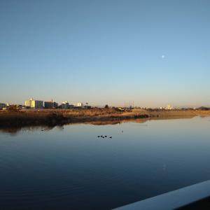 多摩川を12キロ散歩したら〇キロカロリーしか消費してなかった話