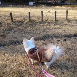 横浜市「三ツ池公園」に愛犬とお散歩へ。カフェもありペット連れにおすすめ