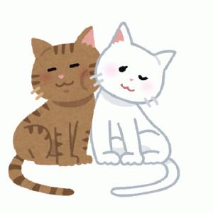 【雑学】メス猫にとってはセックスは苦痛の行為だった?!