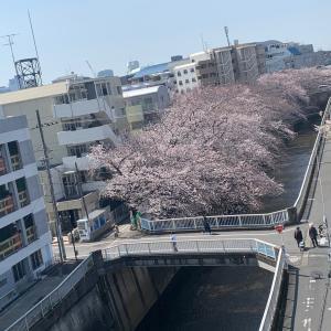 桜!ハッピーバースデー♪