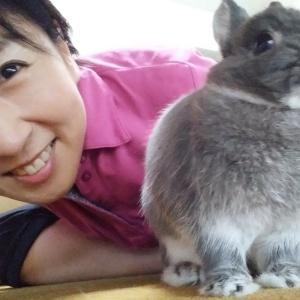 ウサギとエロ妄想
