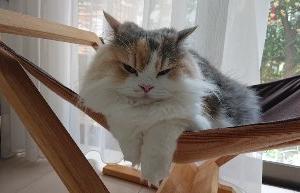 🌼猫のトイレについて🌼