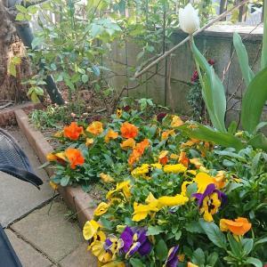 🌼プーちゃん、お庭で息抜き🌼