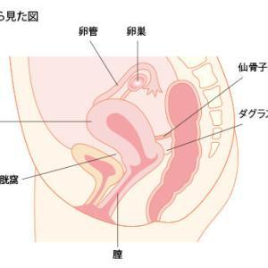 子宮内膜症試験のご案内!【No.20024】