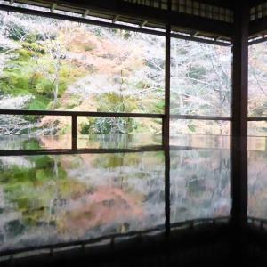 写真掲示の確認(京都・瑠璃光院の紅葉)