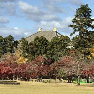 * 奈良公園・紅葉~(2019.11.30)① *