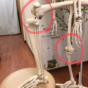 膝の使い方もプレーの質に大きく影響する