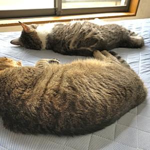 猫も人もバタバタ