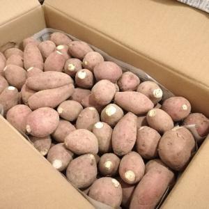 メルカリで安納芋買ってみた