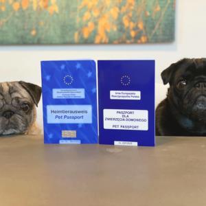 OLパグさんの海外出張とEU発行犬用パスポート
