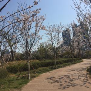 【釜山★犬とアタシ】春探し