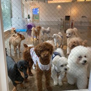 【釜山★犬の幼稚園】犬の種類