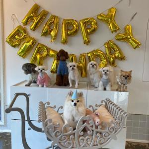 【釜山★犬の幼稚園】ポクトリの誕生日会