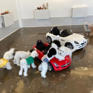 【釜山★犬の幼稚園】最近仲間入りした新たな犬種