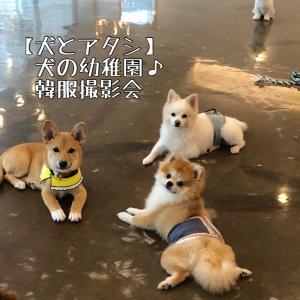 【犬とアタシ】犬の幼稚園で韓服撮影会しました