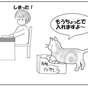 猫と袋 おむすび編87