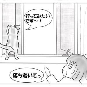網戸に登りたがる猫 おむすび編89