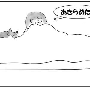 窪みを狙う猫