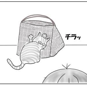 猫は思わせぶり