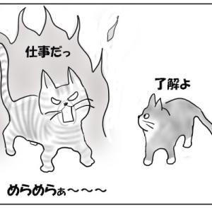 猫の家宅捜索
