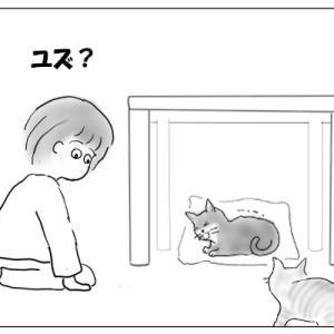 猫の咳について
