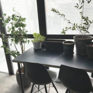 サンルームで『ハーブを育てる』★楽しい空間作り