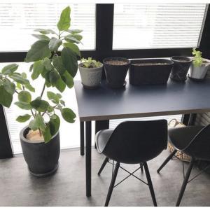 サンルームで菜園を楽しむ★『ハーブ栽培』について【種植え~現在】
