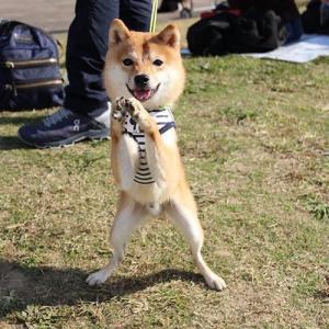 柴犬会の続き③