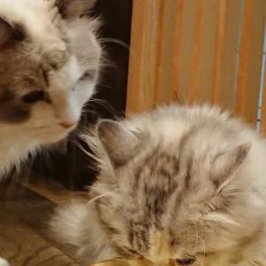 猫のことは 猫に ~猫 多頭飼い~ Vol.12