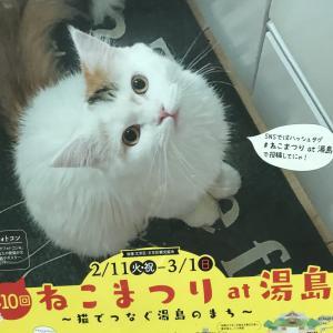 【猫グッズがいっぱい!】湯島で行われている『ねこまつり』に参加してみよう!