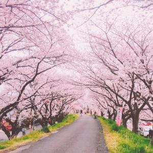 お花見に行きたい