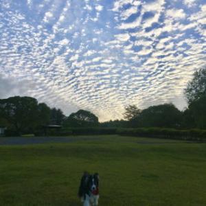 素敵な雲💛