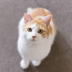 ≪子猫≫ 古谷さんからのお便りです。