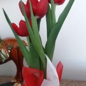 ≪花談議552≫ 恋人の日に妻に花をプレゼント! 東海林さんからのお便りです。