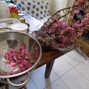 ≪花談議561≫ 桜便り 松栄さんからのお便りです。