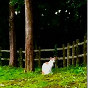 ≪昭子さん & 皆さまへ 「コロナの日々、ペットを飼いたい」 ≫ しゅくこさんから
