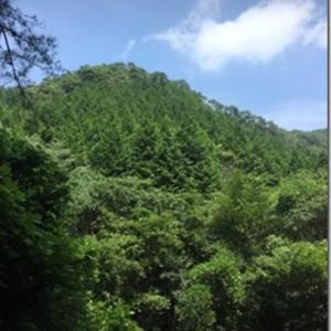 丸木さん  & 皆さまへ 「コロナの日々 渓流で水あそび」 しゅくこさんからのお便りです。