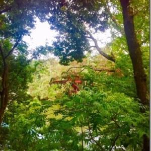 ≪花談義576≫ 日本の秋をお送りします。 しゅくこさんからのお便りです。