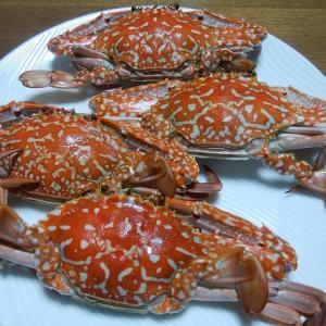親戚から渡り蟹を頂きました!!