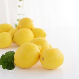 レモンの種は成長する?